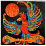 Rare Bird2